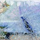 DBE İş Kazalarını Önleme Projesi